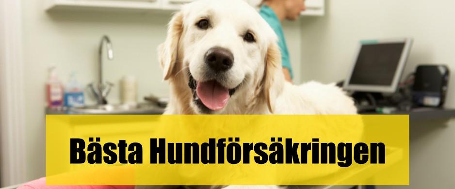 Bäst hundförsäkring