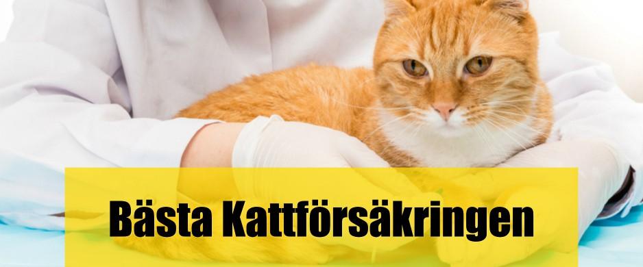 Bäst Kattförsäkring