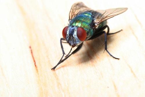 Insektsfällor med skrämseleffekt