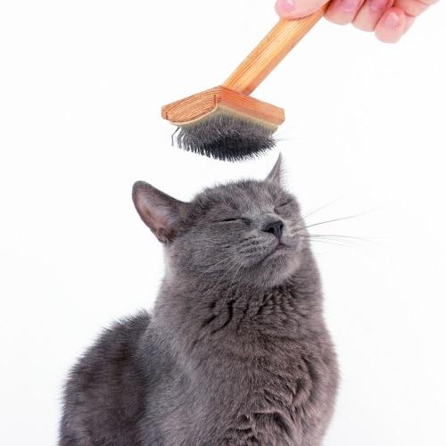 Att borsta katten