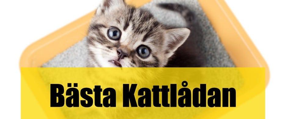 Bäst Kattlåda