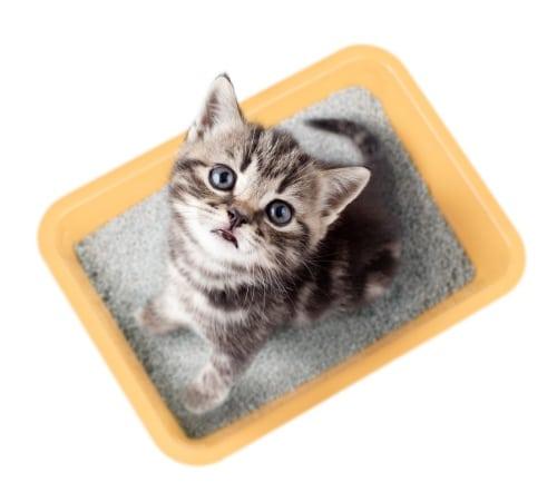reducera lukt i kattlådan