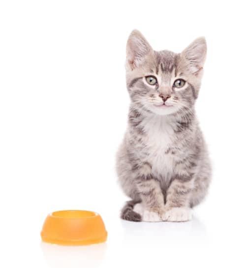 Vad bör katten äta
