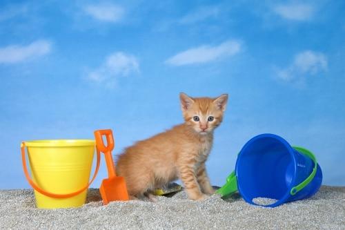Vilken kattsand är bäst för miljön?