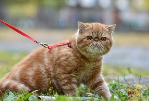 Bra att tänka på vid användning av kattsele