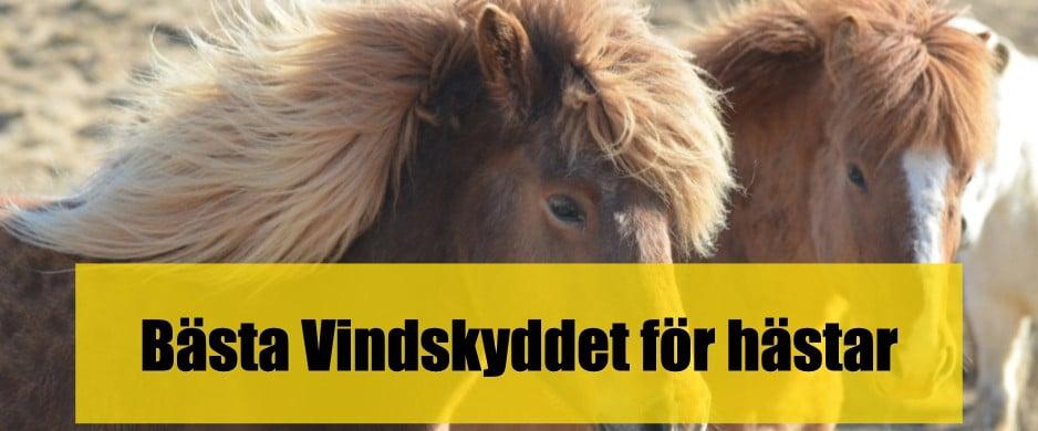 Bästa Vindskyddet för hästar