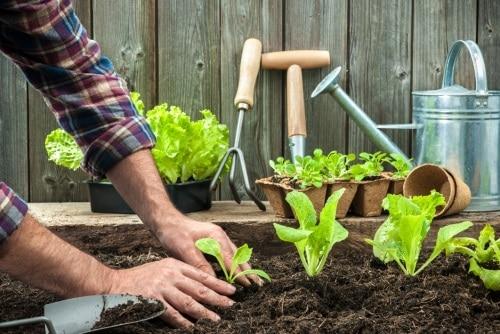 Om du odlar i odlingslåda eller pallkrage.