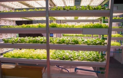 Tillräckligt mycket ljus så att växterna kan fortsätta att växa.
