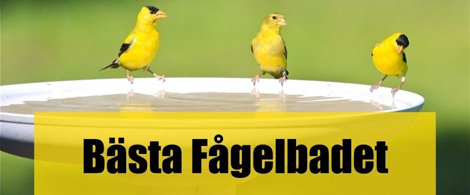 Bäst Fågelbad
