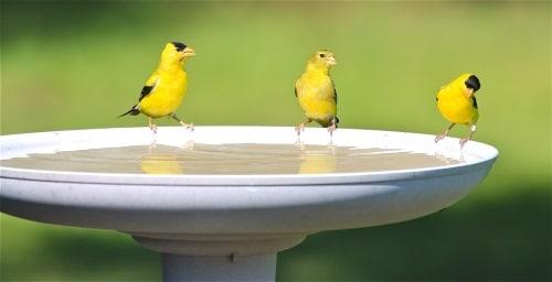 Att göra sitt eget fågelbad