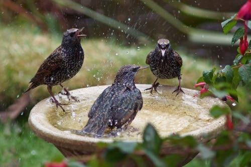Ett vackert fågelbad - En oas för småfåglarna.