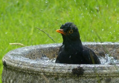 Vackra fågelbad