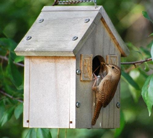 Bygga din egen fågelholk