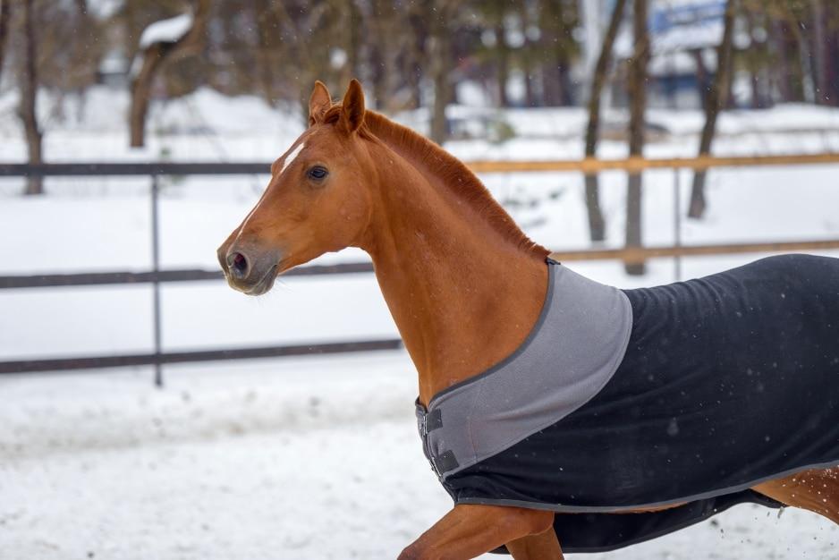 En överblick över de hästtäcken som är vanligast