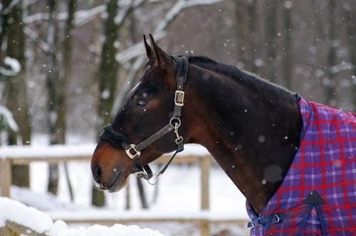 Hästtäcke på både sommar och vinter.
