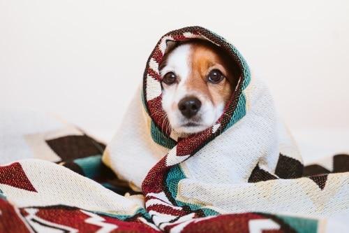 Hitta en skön och bra hundbädd till din hund