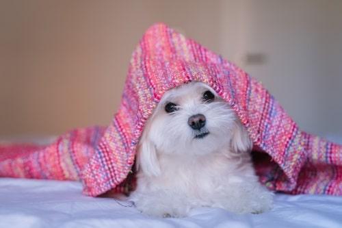 Bädd för hunden som är mjukt och skönt, och som är värmande under kalla vinternätter.
