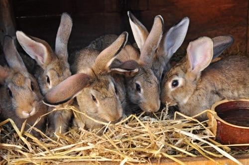 Burar till kaniner
