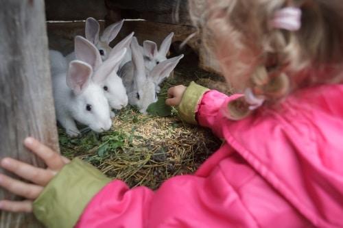 Kaniner är mycket sociala djur