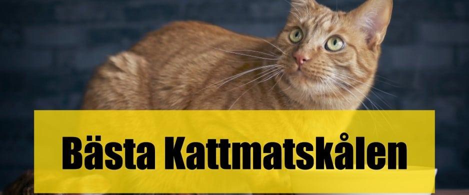 Bäst Kattmatskål