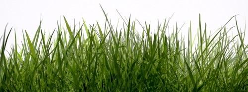 För att slå högt gräs