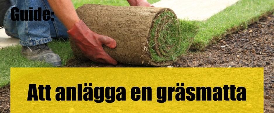 Att anlägga en ny gräsmatta