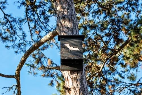 Fladdermusholkens höjd från marken - placera den 3-4 meter ovan marken.