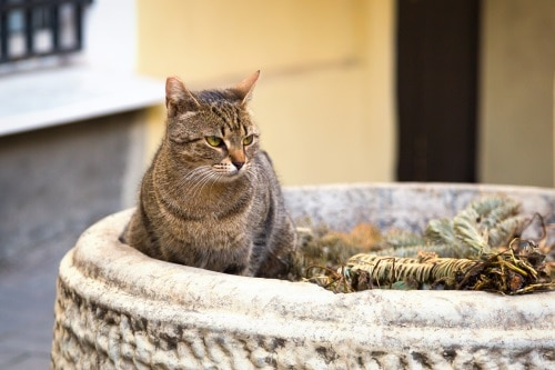 Trygghet är viktigt för katter