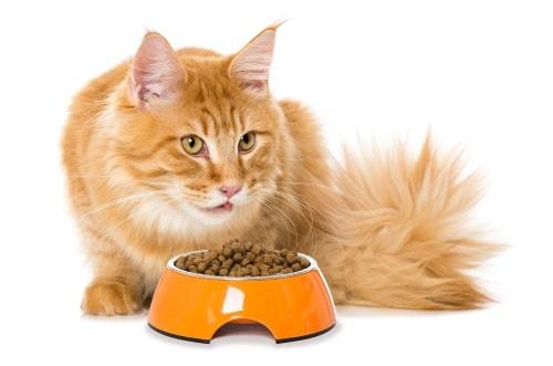Att tänka på vid köp av kattmatskål