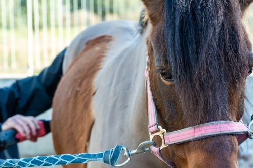 val av klippmaskin för häst