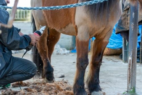 Vilke klippstil passar till din häst?