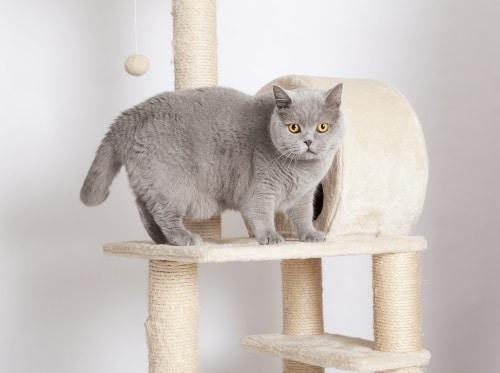 Klösträd som är tillräckligt stora och rymliga för att din katt ska kunna få plats